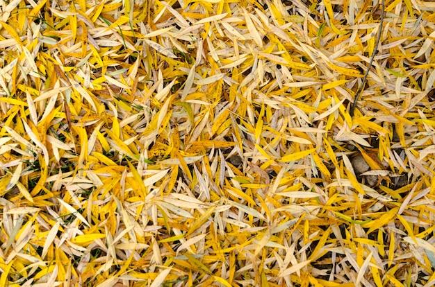 Fondo de hojas amarillas de otoño