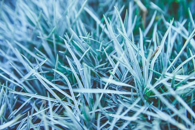Fondo de hojas de hierba. primer plano de la hierba textura natural. belleza en la naturaleza.