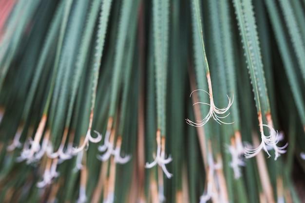 Fondo de hojas largas espinosas verdes