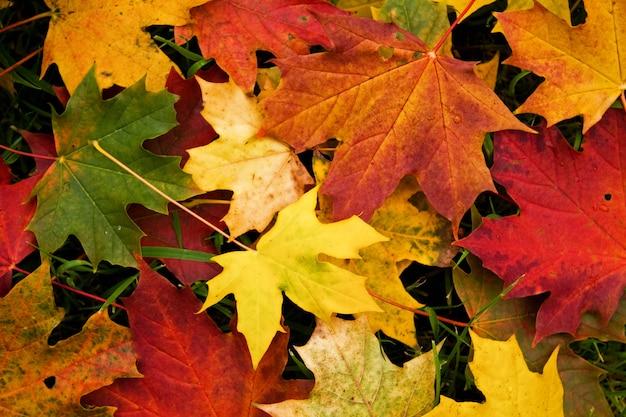 Fondo de hojas de otoño de color amarillo brillante, naranja y verde.