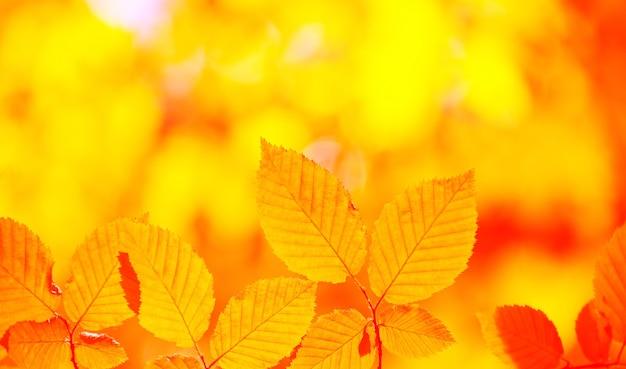 Fondo de hojas de otoño en un día soleado