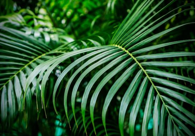 Fondo de hojas de palma tropical verde