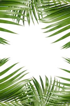 Fondo de hojas de palma