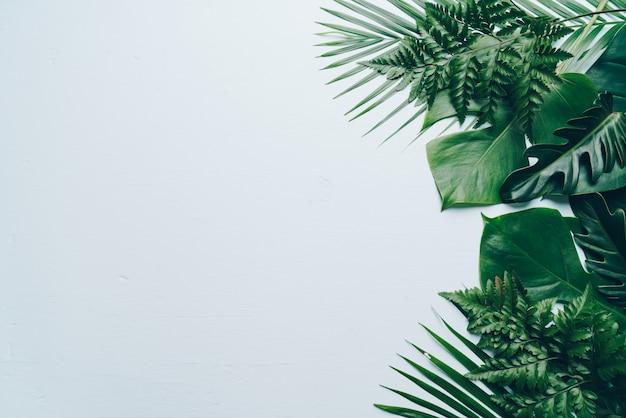 Fondo de hojas de palmeras tropicales