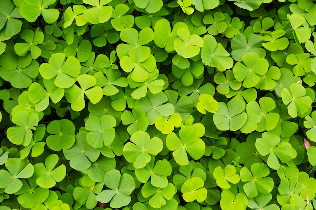 Fondo de hojas de tréboles verdes
