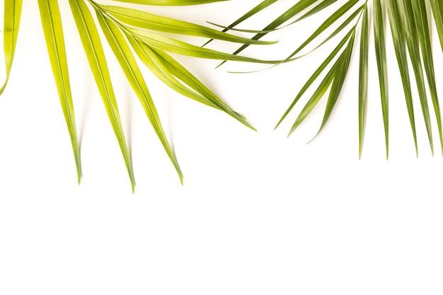 Fondo de hojas tropicales con espacio de copia, dimensiones originales 5129 x 3420 píxeles