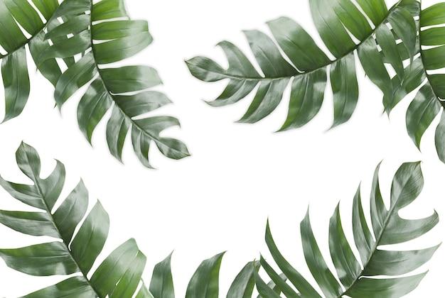 Fondo de hojas tropicales con espacio de copia