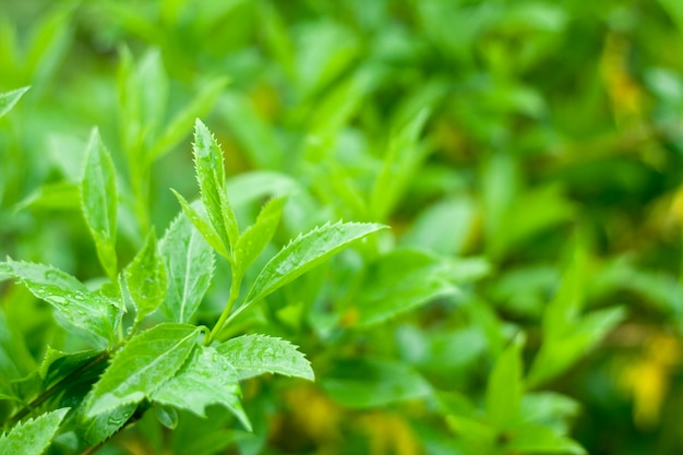 Fondo de hojas verdes exuberantes con gotas de lluvia
