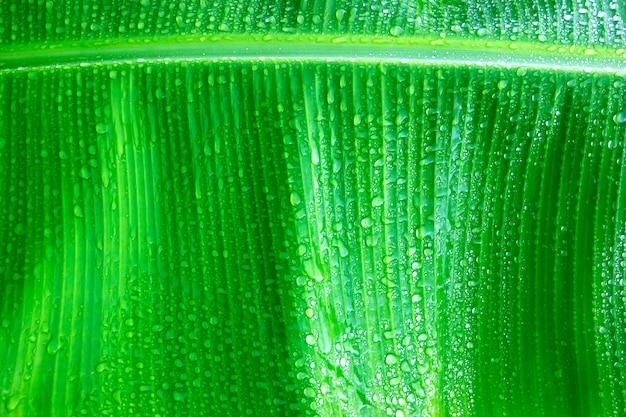 Fondo de hojas verdes frescas