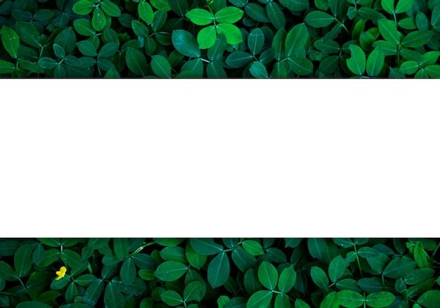 Fondo de hojas verdes en luz oscura concepto de imagen ecológica o fondo del concepto de refresco, dimensiones originales 5472 x 3648 píxeles