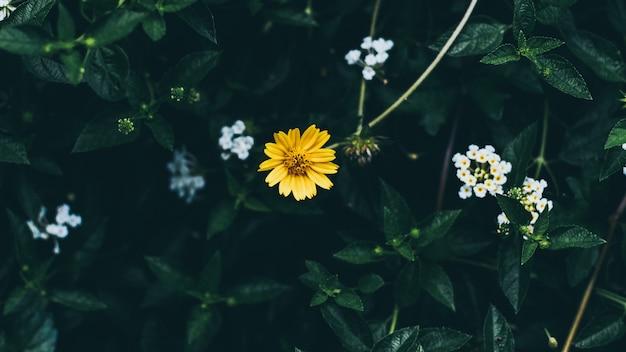 Fondo de hojas verdes con pequeña flor amarilla pequeña;