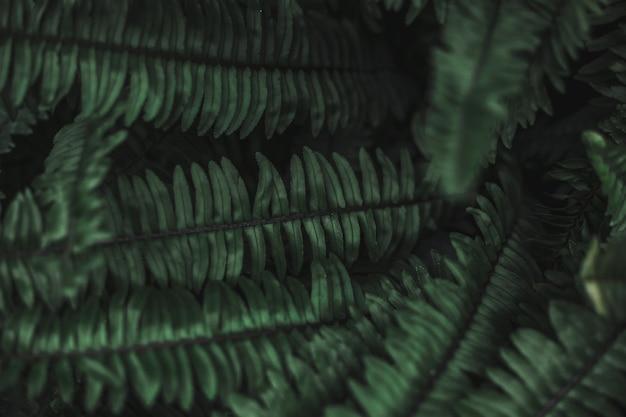 El fondo de hojas verdes