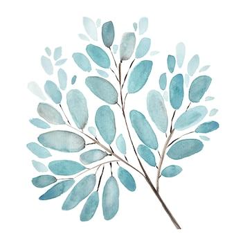Fondo de ilustración acuarela de hojas y ramas. conjunto de elementos florales pintados a mano. ilustración botánica acuarela. eucalipto, olivo, hojas verdes.