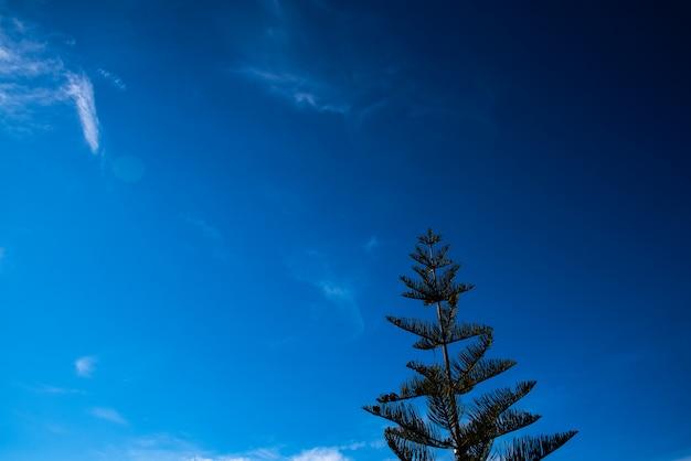 Fondo intenso del cielo azul con un árbol de abeto, espacio de la copia.