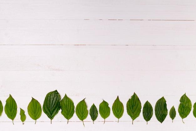 Fondo de madera con arreglo de hojas del bosque.
