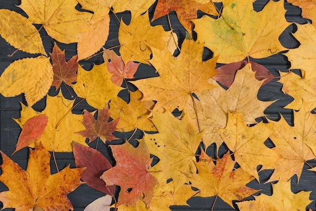 Fondo de madera oscura con hojas amarillas de otoño