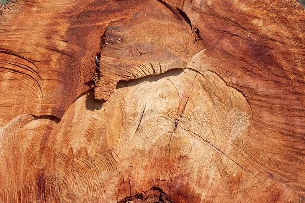 Fondo de madera del tocón.