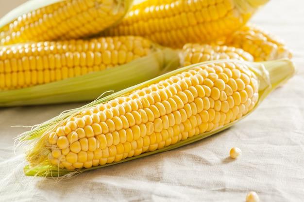 Fondo de maíz