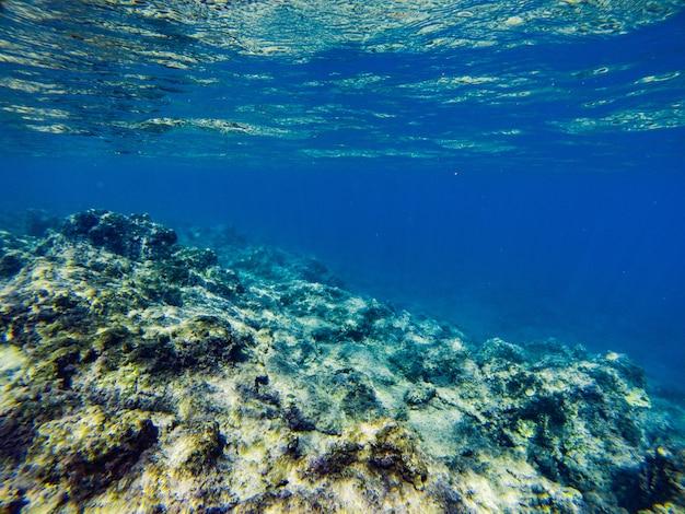 Fondo marino con arrecifes de coral y algas bajo el agua azul-verde.
