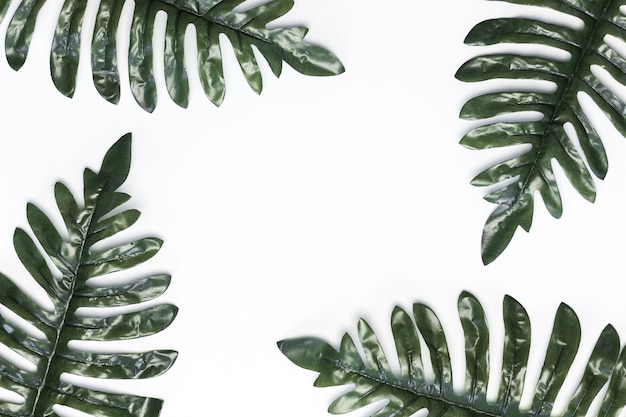 Fondo monstera verde hojas blanco