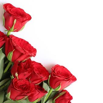 Fondo multiusos de la rosa roja para el aniversario, la boda, el cumpleaños u otras celebraciones