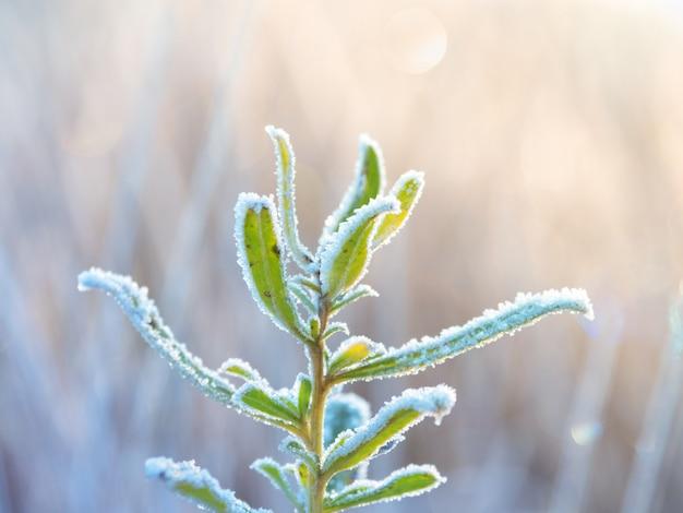 Fondo natural abstracto helado de invierno