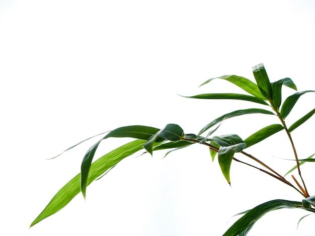 Fondo natural asiático con bambú.
