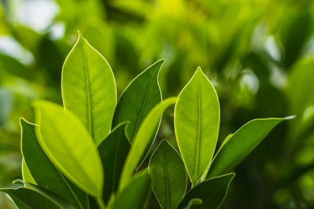 Fondo natural de hoja verde brillante con gota de lluvia.