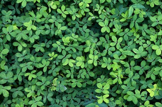 Fondo natural de hojas verdes.