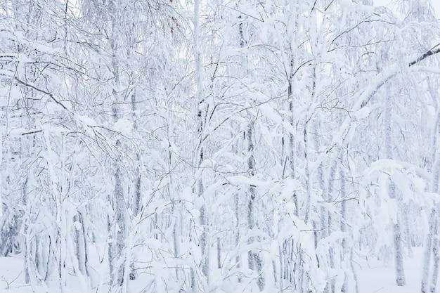 Fondo natural, paisaje - bosque de invierno después de las nevadas