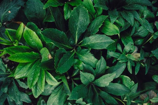 Fondo natural texturizado de muchas hojas verdes