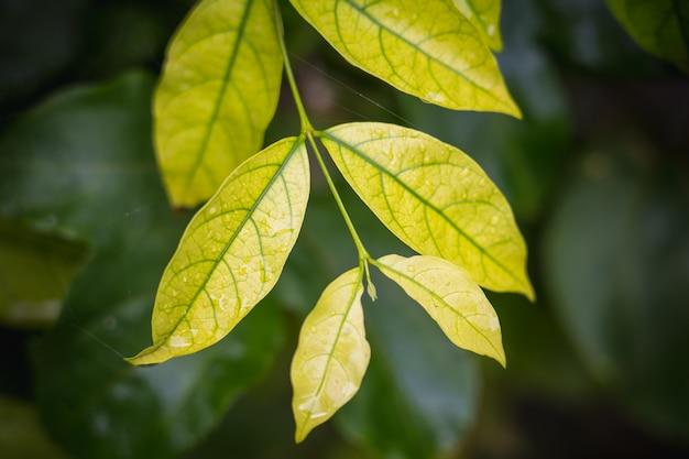 Fondo natural de verde brillante estilo abstracto borrosa de hojas de plantas