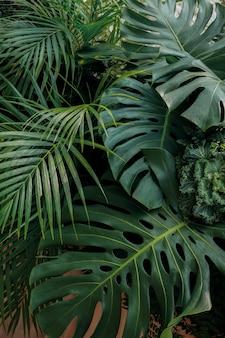 Fondo de naturaleza de hojas tropicales verdes, arreglo floral con monstera, fronda de palma y plantas ornamentales de follaje