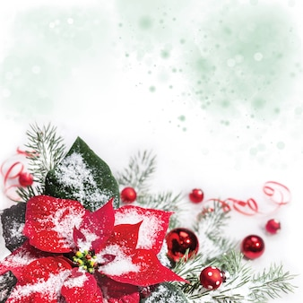 Fondo de navidad con flor de pascua con espacio de copia