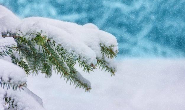 Fondo de navidad de invierno fondo con ramas cubiertas de nieve de un árbol de navidad con espacio de copia
