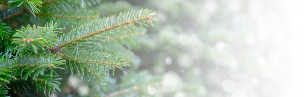 Fondo de navidad con ramas nevadas