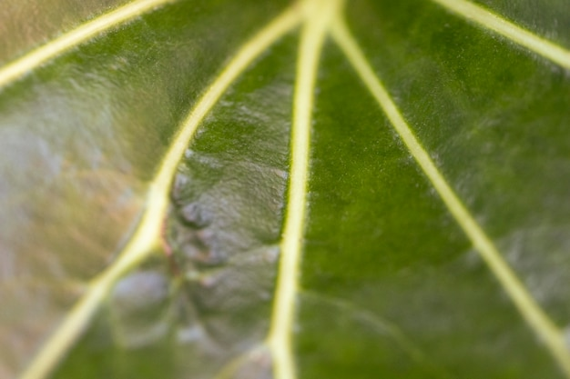 Fondo orgánico de hoja verde de primer plano