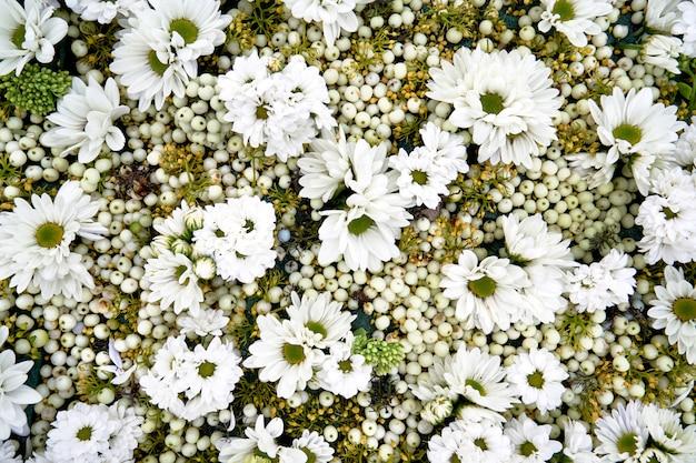Fondo otoñal de flores blancas.