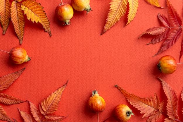 Fondo de otoño la caída deja el marco sobre un fondo rojo