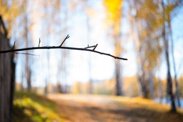Fondo de otoño, naturaleza, rama de árbol en el fondo de un parque de otoño, enfoque selectivo