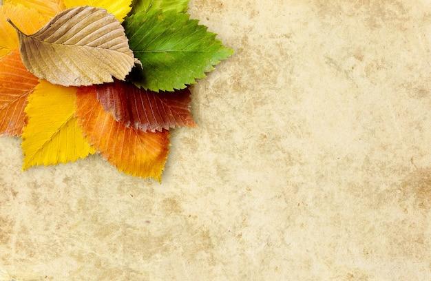 Fondo de otoño papel viejo con composición de hojas de olmo otoñal en esquina