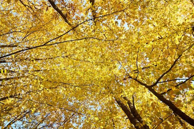 Fondo de otoño