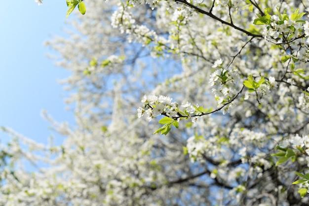 Fondo de pancarta con árboles en flor en un jardín con reflejos florales y cielo en primavera y verano
