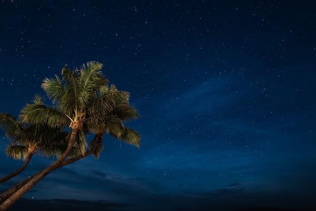 Fondo de pantalla de palmeras