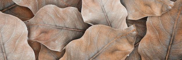 Fondo y papel tapiz de patrón de hojas secas beige