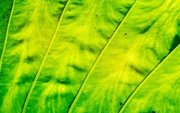 Fondo de pared de hojas verdes, fondo de naturaleza de pared de hoja