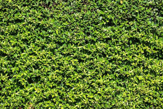 Fondo de pared de hojas