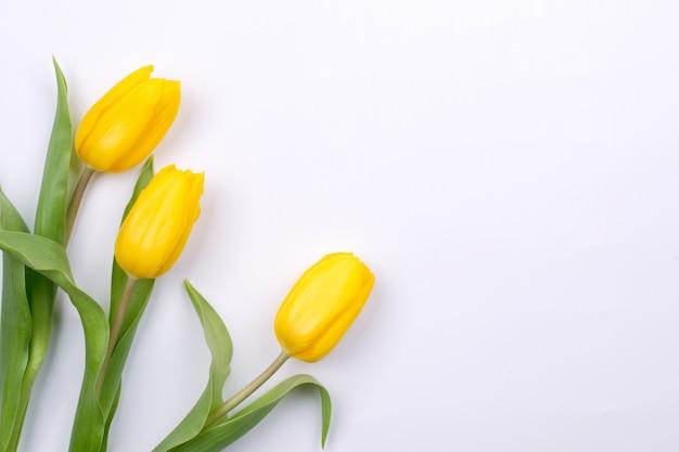 Fondo de pascua con tulipson amarillo sobre blanco. tarjeta de felicitación para el día de la madre. copia espacio lay flat
