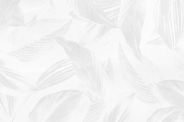 Fondo de patrón de hoja de calathea lutea gris