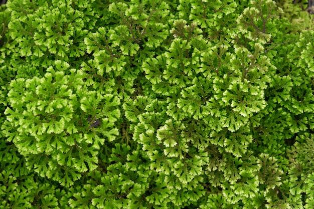 Fondo de patrón de hoja de helecho verde